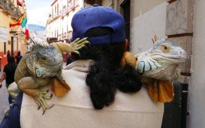 Guanajuato has Iguanas and a snake! – by Jaxon